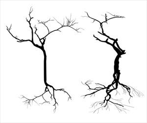 Dead Trees Silhouette