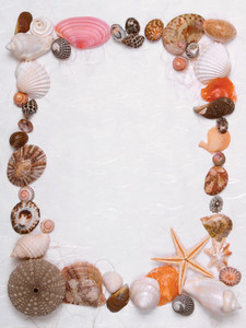 Decorative Frame Made From Different Shells And Mussels