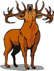 Deer Roaring