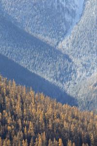 Dense, sunlit forest