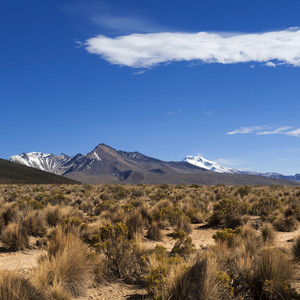 Desert vegetation and a distant snow-capped mountain