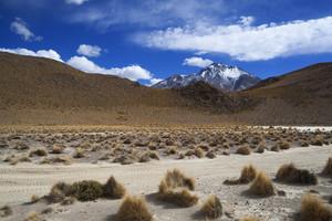 Desert vegetation and distant mountains under a blue sky