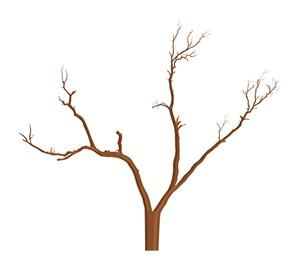 Destroyed Dead Tree
