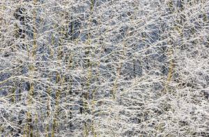 Detail of snowdrift