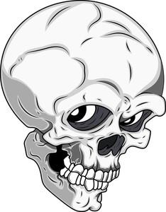 Detailed Skull Vector Illustration