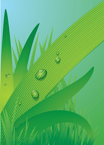 Dew Drops On The Blade Of Grass. Vector.
