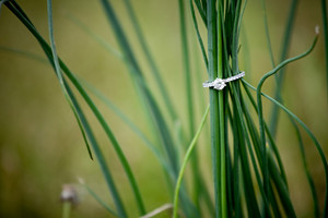 Diamond Engagement Ring in the Grass