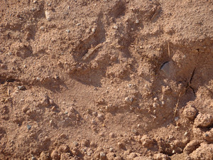 Dirt And Mud 2 Texture