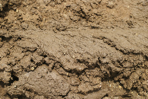 Dirt And Mud 5 Texture