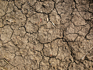 Dirt And Mud Cracked 2 Texture