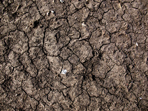 Dirt And Mud Cracked 4 Texture