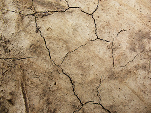Dirt And Mud Cracked 5 Texture