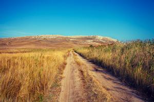 Dirt road in savannah