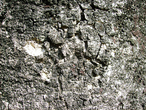 Dirty_tree_wood_bark