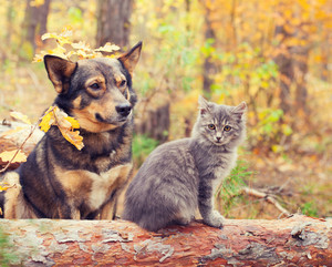 Dog and cat best friends sitting together outdoors in autumn forest