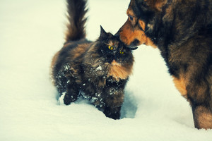 Dog and cat outdoors in snow