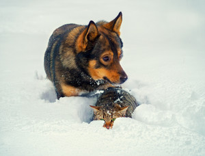 Dog and cat playing together in the snow