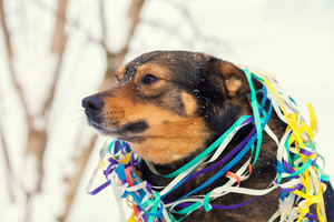 Dog entangled in colorful streamer outdoors