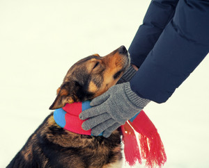 Dog in snow being pet