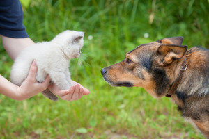 Dog meets little kitten in female hands