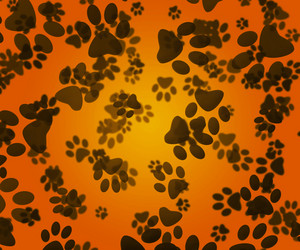 Dog Paws Orange Background