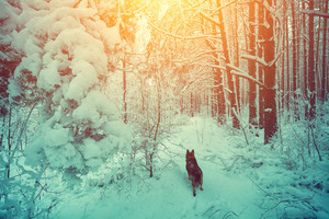 Dog running in the winter forest