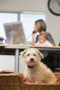 Dog sitting in home office with woman holding baby in background