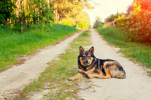 Dog sitting on the dirt road in countryside