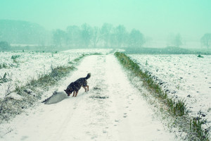 Dog walking on the green field cowered with first snow