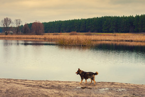 Dog walking on the river bank in autumn