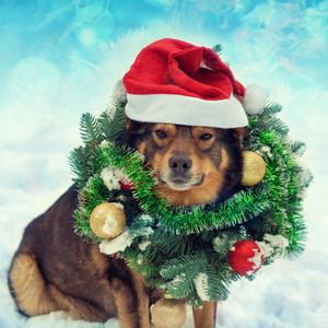 Dog wearing christmas wreath sitting outdoors in snow