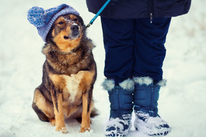 Dog wearing knitted hat with pompom walking with owner outdoors in winter