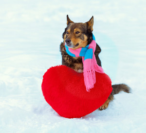 Dog wearing scarf playing with red heart-shaped pillow