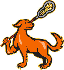 Dog With Lacrosse Stick Side View