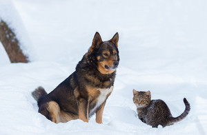 Dog with little kitten sitting in snow