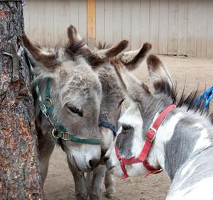 Donkey Chat