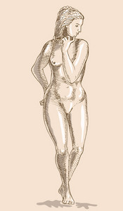 Drawing Of The Female Human Anatomy Figure