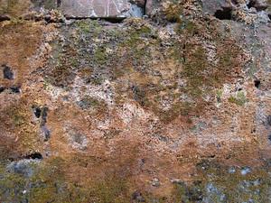 Dried_lichen_texture