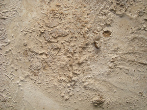 Dried_mud_texture
