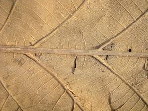 Dry Leaf Close Up