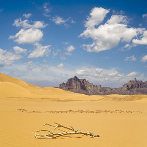 Dry, sun-bleached branch in a sandy desert