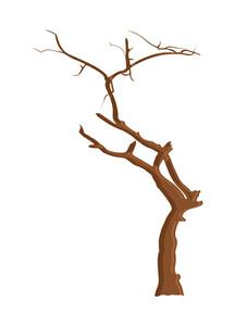 Dry Tree Wood