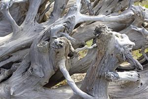 Dry Tree Woods