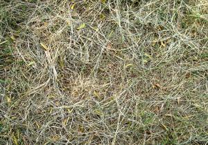 Dry_grasses