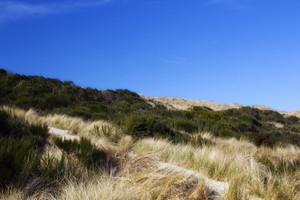 Dunes Line