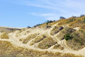Dunes Texture