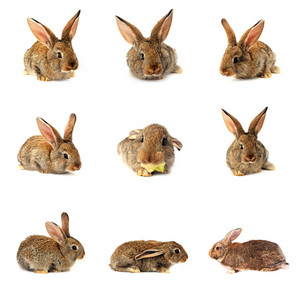 Easter Bunny - Isolated Set