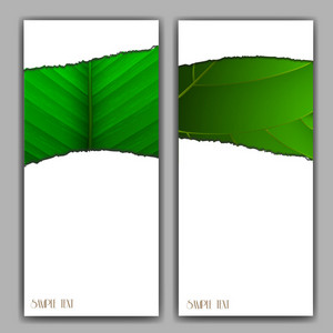Eco Vertical Banners