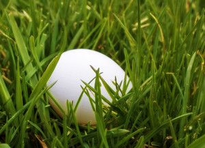 Egg In Grass Background