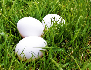 Eggs 02
